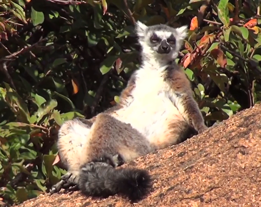 Madagaskar! ..z Seanem Villanueva